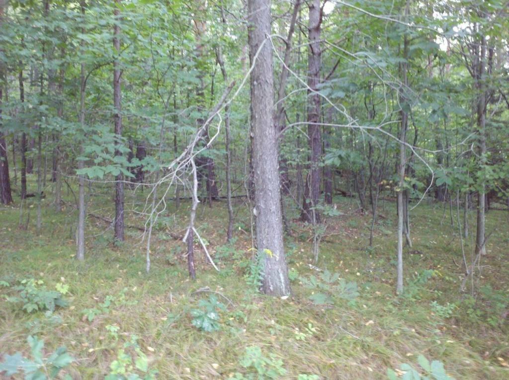 19 Acres- Piney Township, Clarion County, Pa (Shamburg) - Blue Sky Real Estate-2021 Indiana Deer Season