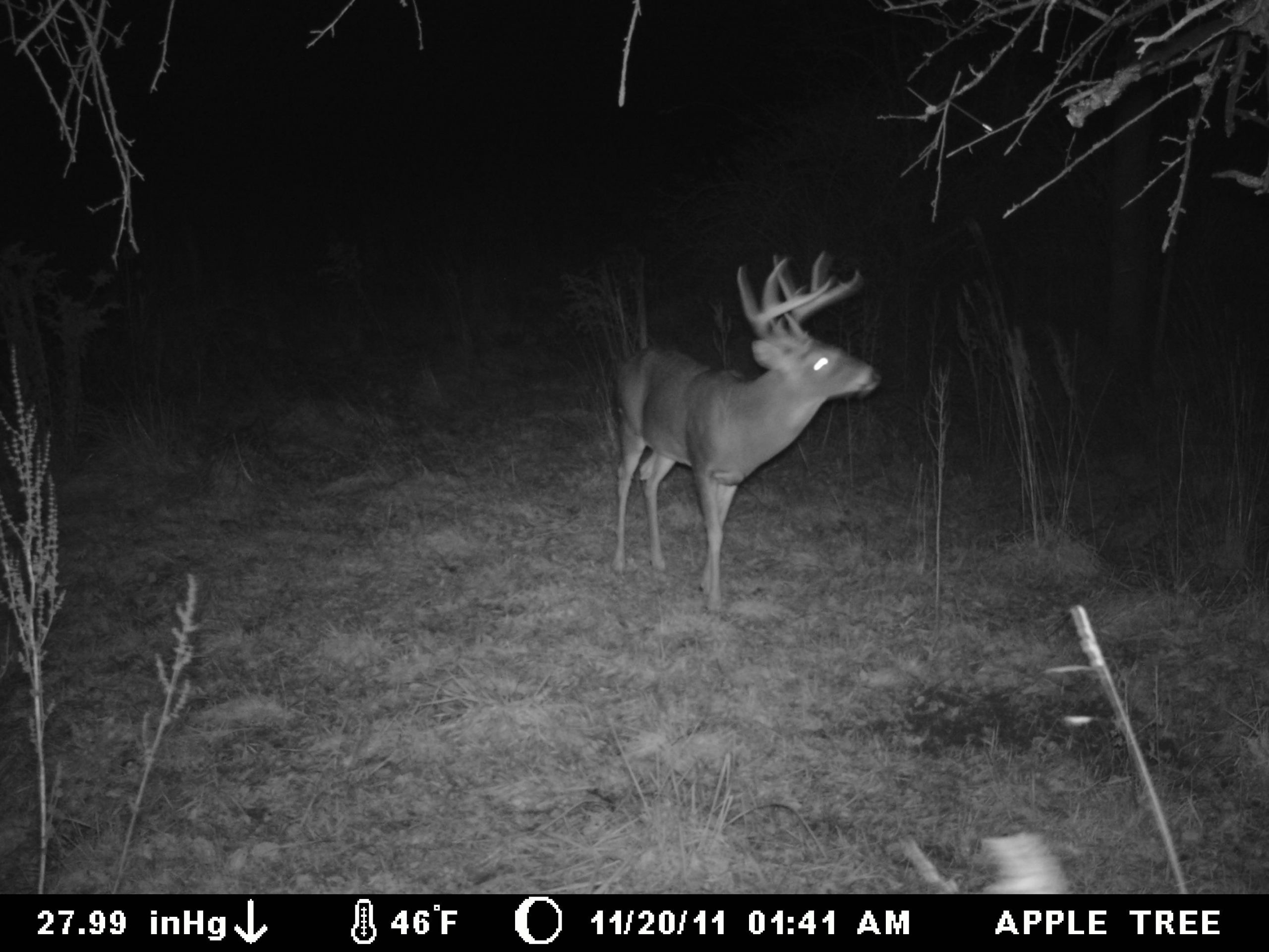 2012 Whitetail Rut To Peak In Early November - News - The Wellsville Daily Reporter - Wellsville, Ny-2021 Nys White Tail Rut