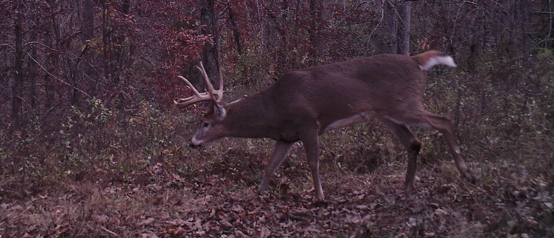 2016 Rut Predictions – Could It Be Another Late Whitetail Deer Rut? | Wired To Hunt-2021 Rut Forecast For Pa
