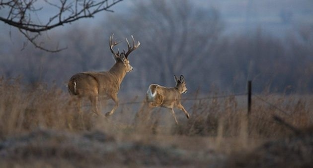 2017 Whitetail Rut Forecast And Predictions ⋆ Outdoor Enthusiast Lifestyle Magazine-Whitetail Rut Predictions For 2021