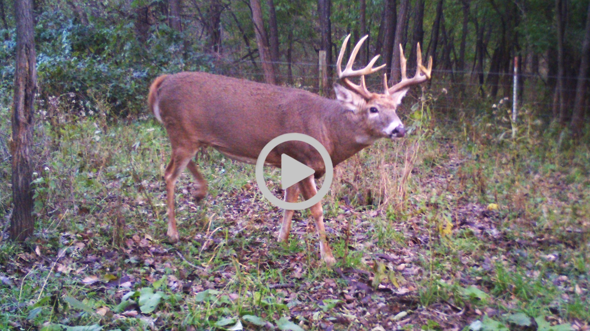 2018 Rut Prediction For Kansas - Midwest Whitetail-Deer Rut Predicted Dates For 2021
