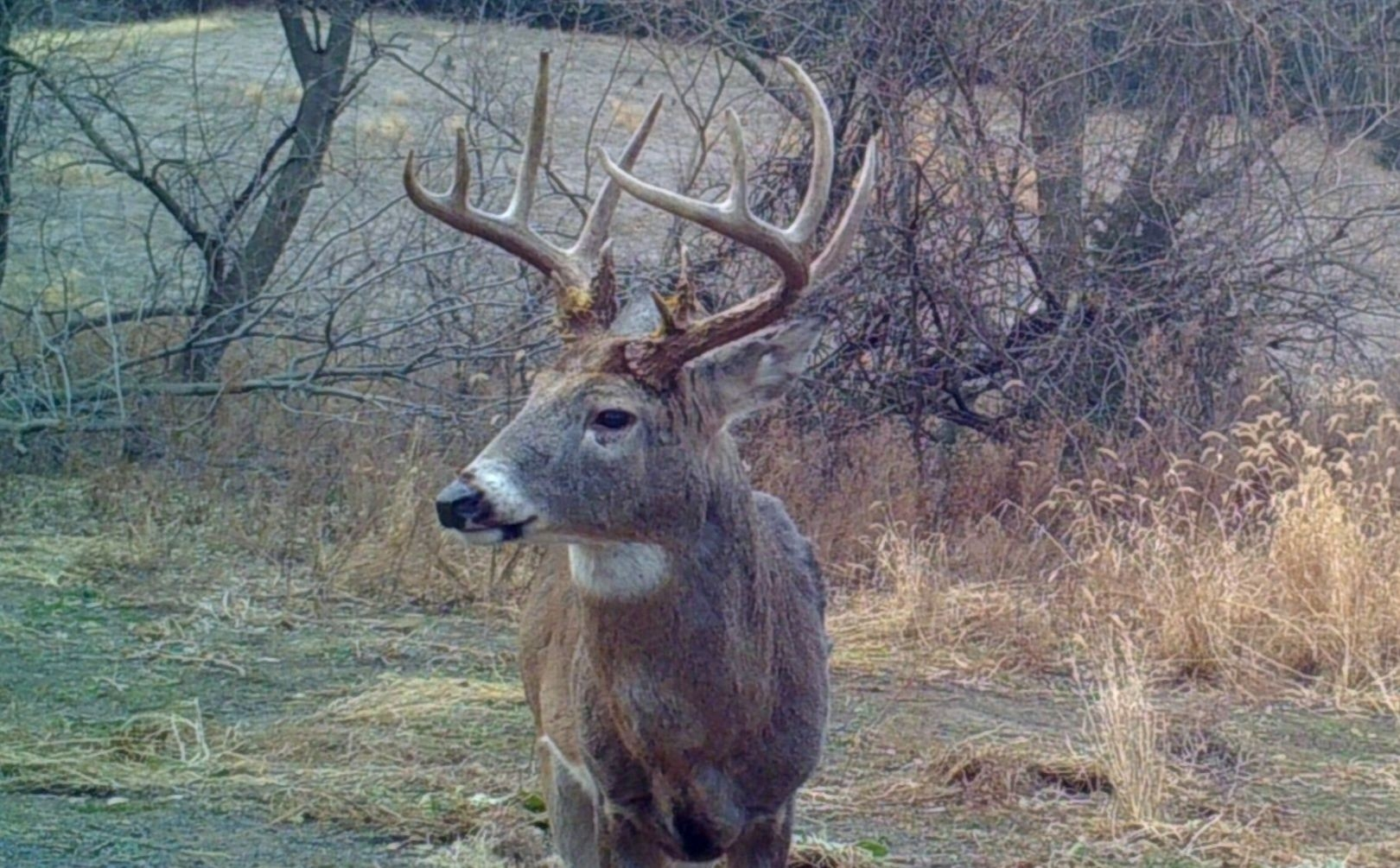 2018 Whitetail Rut Forecast And Hunting Guide | Whitetail Habitat - Deer Rut Map Texas-Whitetail Rut In Texas 2021
