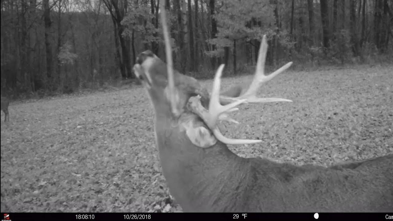 2020 Rut Forecast Whitetail Deer – Template Calendar Design-2021 Ohio Deer Rut