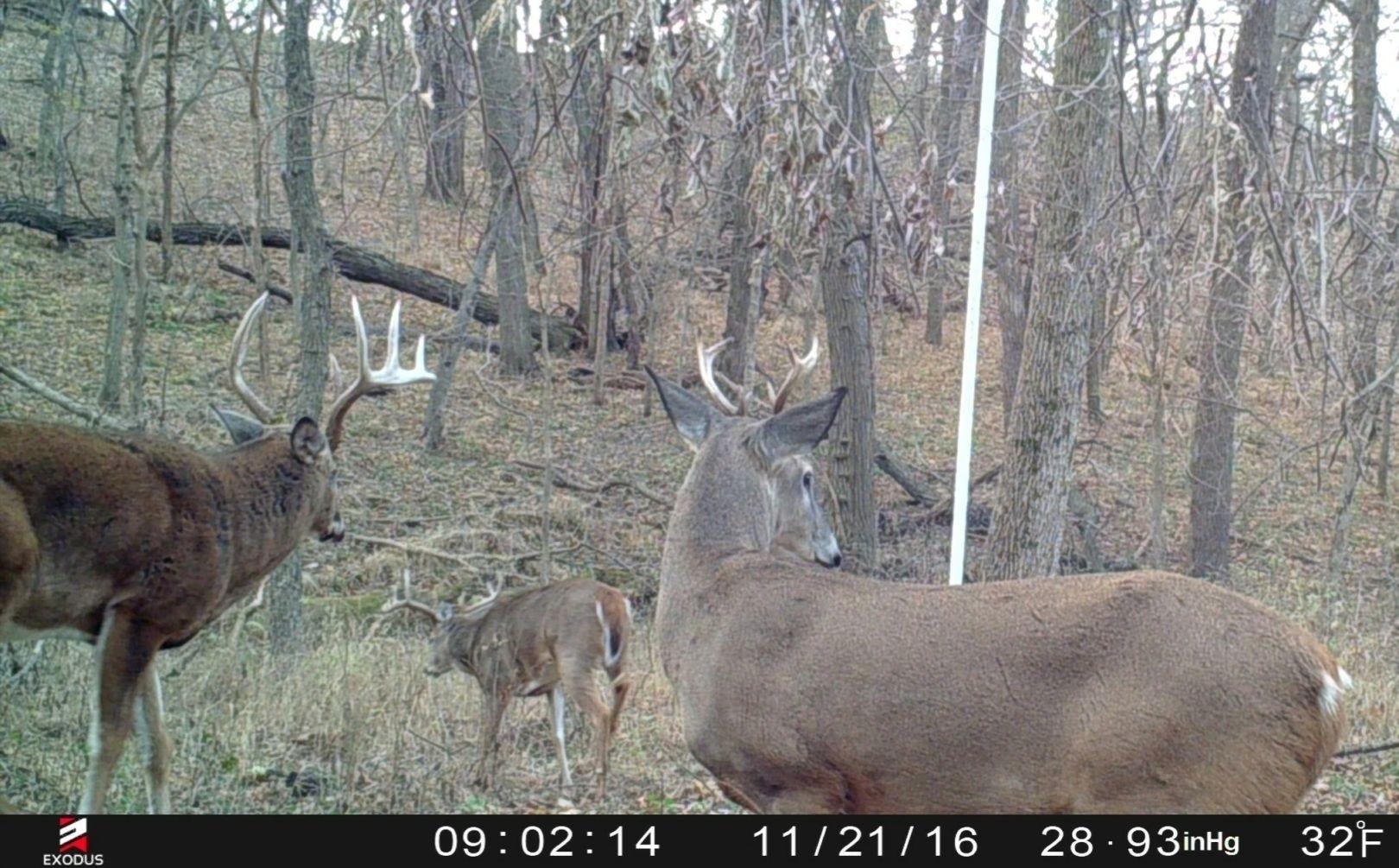 2020 Rut Prediction Illinois – Template Calendar Design-2021 Deer Rut Calendar