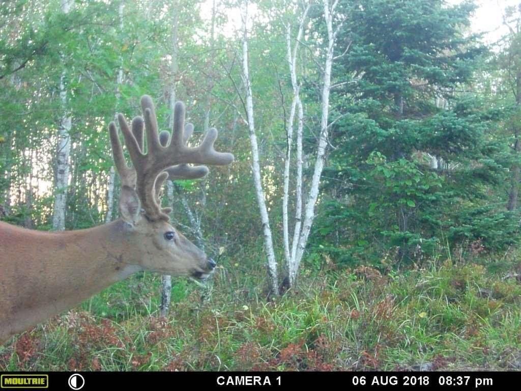 2020 Rut Predictions | Calendar Printable Free-Deer And Deer Hunting Rut Prediction 2021