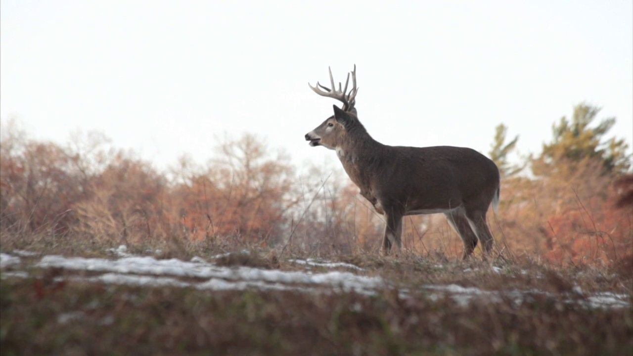 2020 Rut Predictions Illinois   Calendar Template Printable Monthly Yearly-When Is 2021 Whitetail Rut Predicted