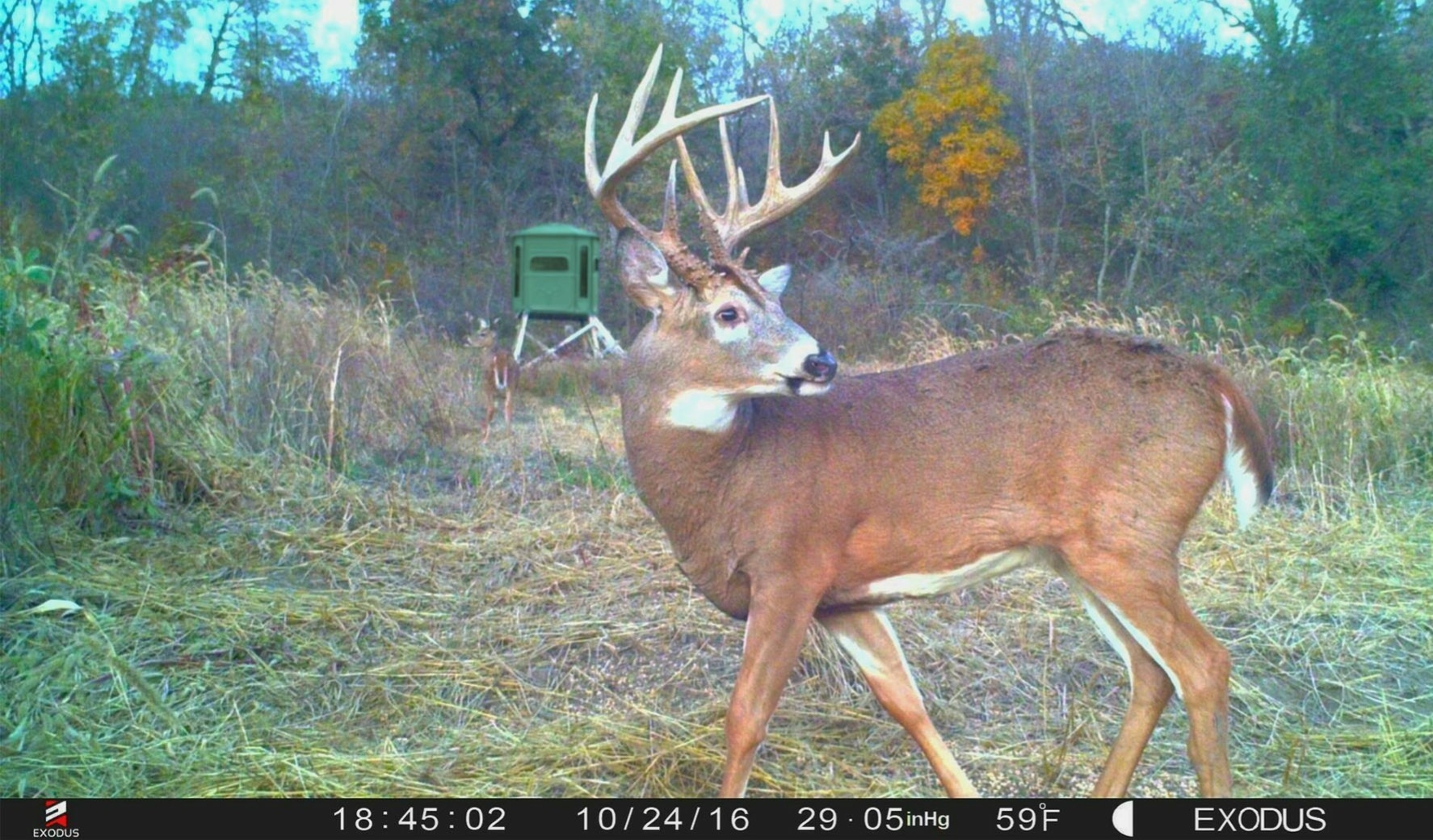 2020 Rut Predictions Illinois   Calendar Template Printable Monthly Yearly-Whitetail Rut Predictions For 2021