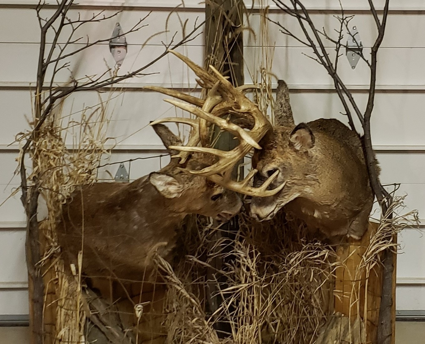 Big Deer | Big Deer Blog | Page 13-Whitetail Deer Rut In Indiana