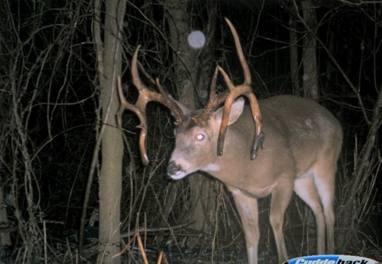 Big Deer Moon & Rut Guide 2018 | Big Deer-Va Deer Rut 2021