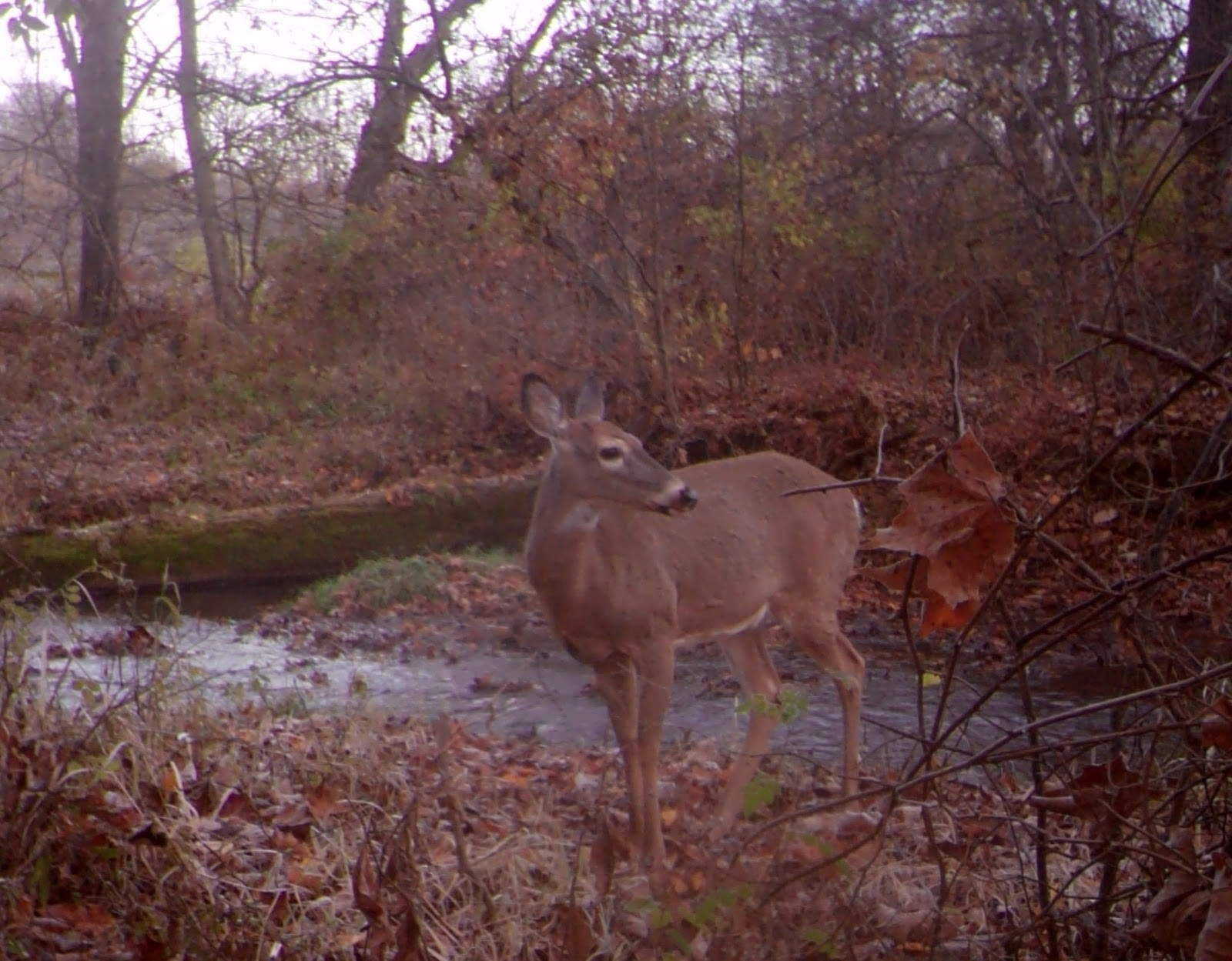 Central Pennsylvania Forestry: The Science Behind The Whitetail Rut-Whitetail Rut In Pa 2021