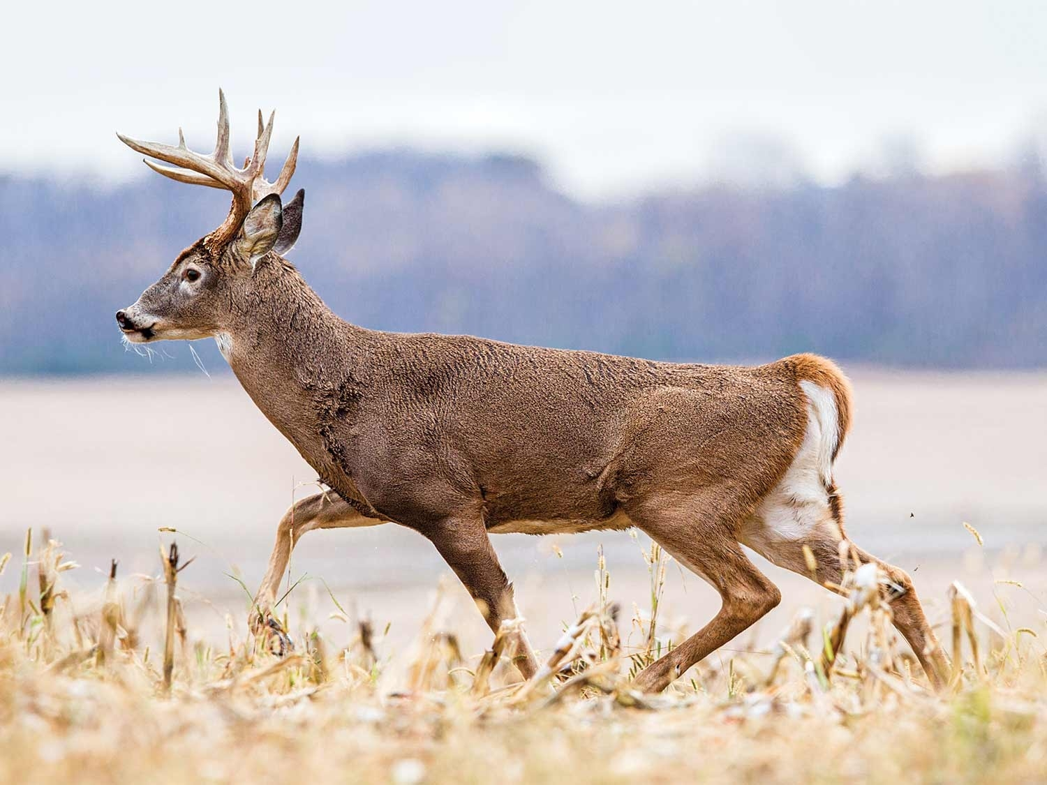 Collect 2020 Illinois Deer Rut Activity | Calendar Printables Free Blank-Whitetail Rut In Texas 2021