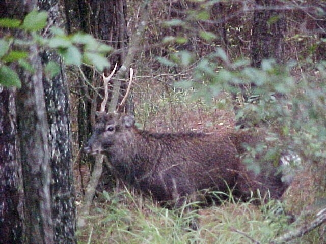 Deer – Fish & Hunt-Maryland Deer Rut 2021