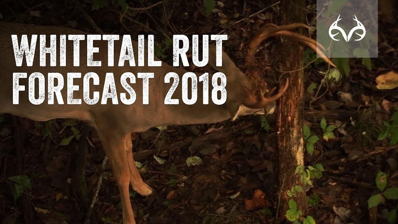 Deer Rut Forecast 2020 – Template Calendar Design-2021 Deer Rut Calendar