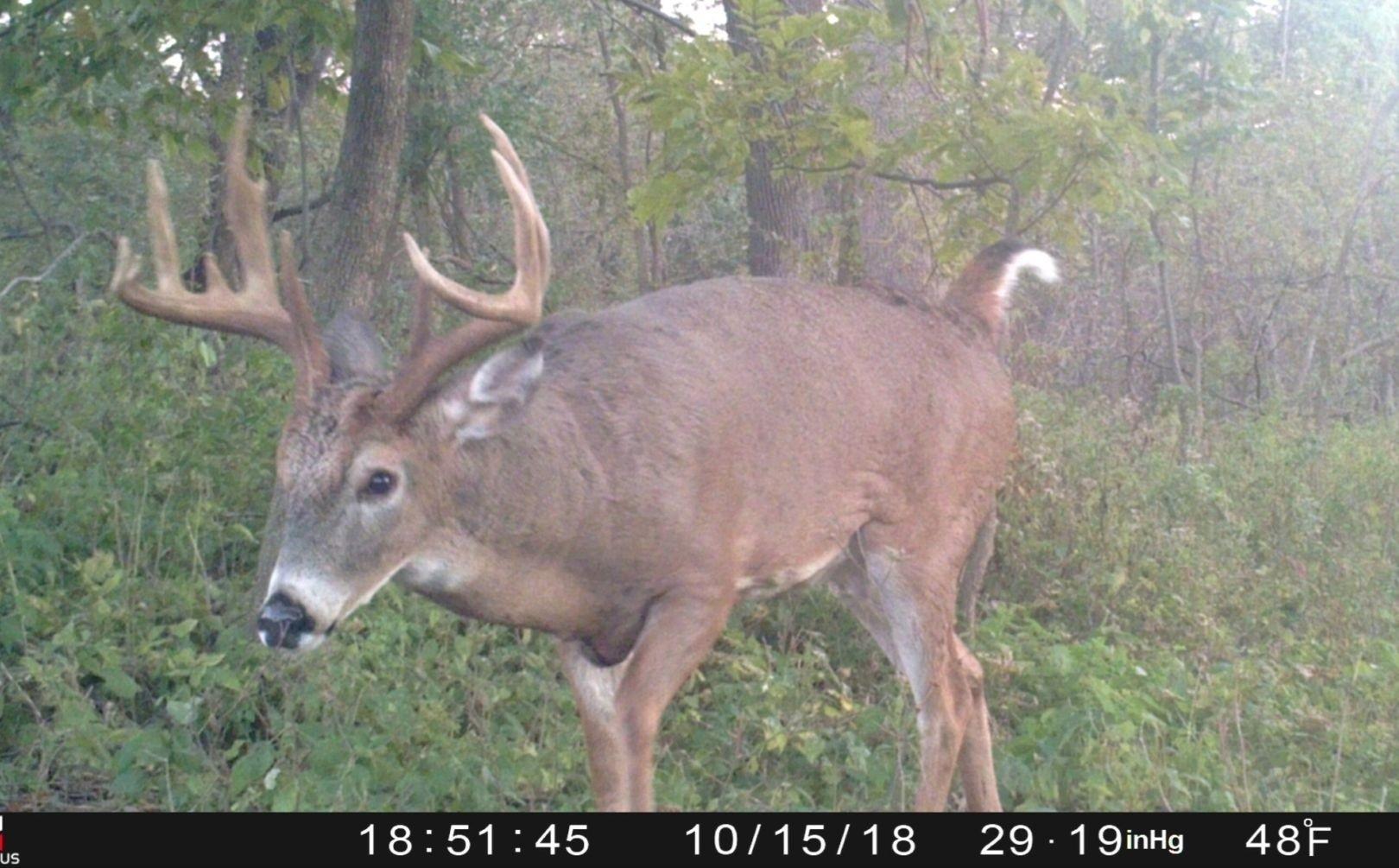 Deer Rut Forecast 2020 – Template Calendar Design-Southern Maryland Whitetail Deer Rut