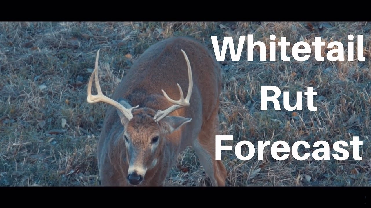 Deer Rut Predictions Illinois | Calendar Printable Free-2021 Deer Rut Predictions