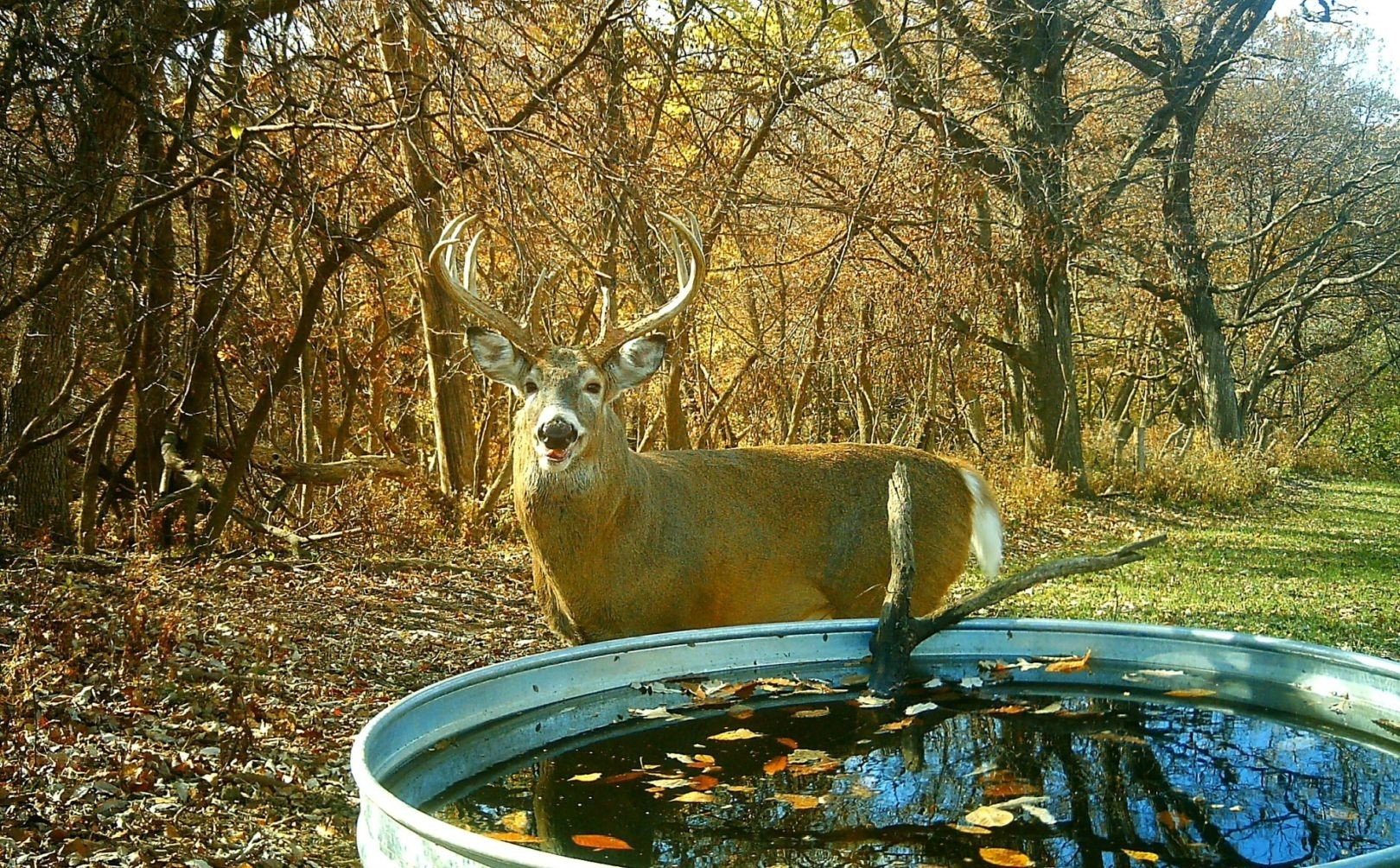Deer Rut Predictions Illinois   Calendar Template Printable Monthly Yearly-Whitetail Rut Predictions For 2021