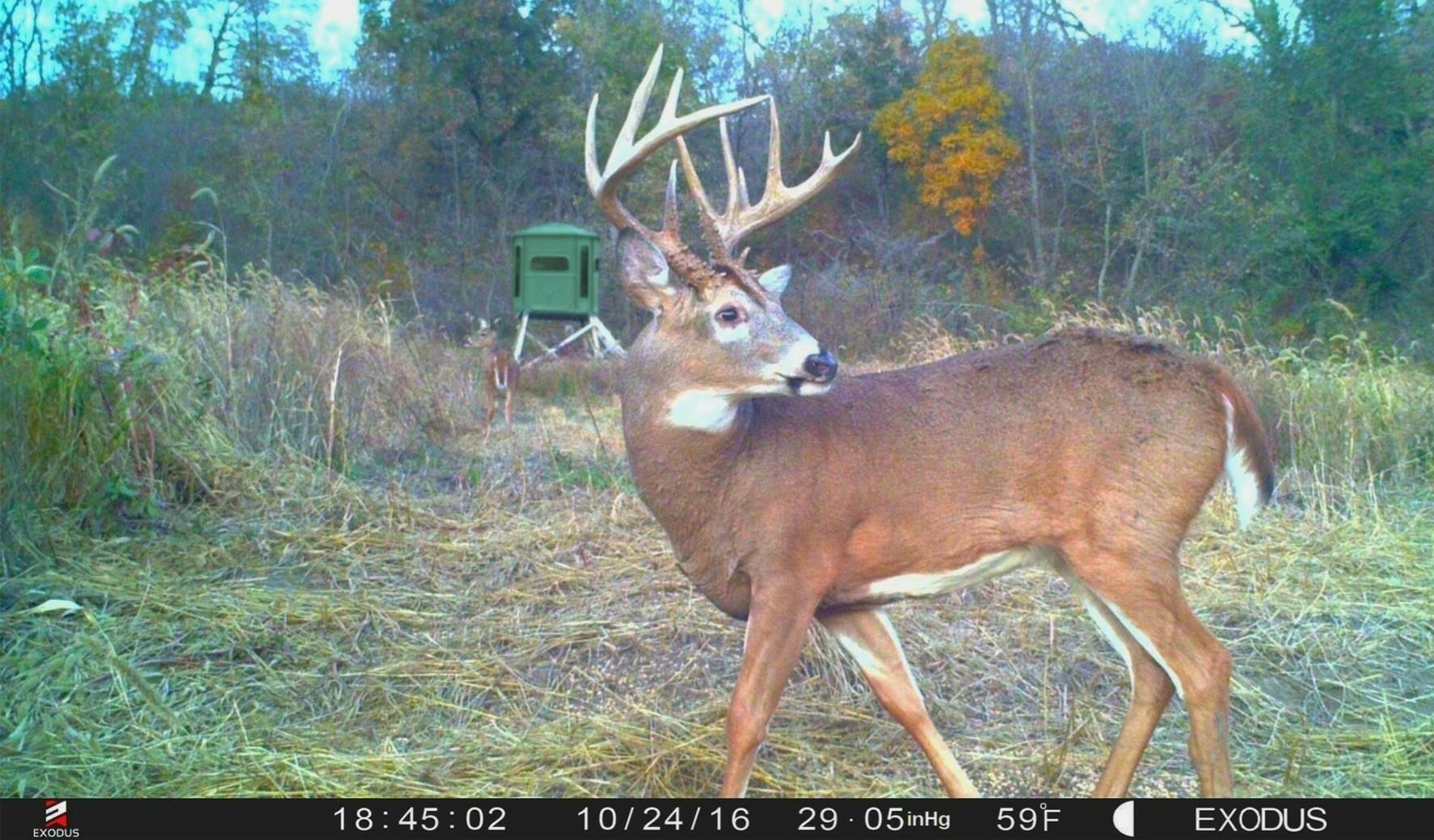 Deer Rut Schedule – Template Calendar Design-2021 Whitetail Deer Rut Predictions