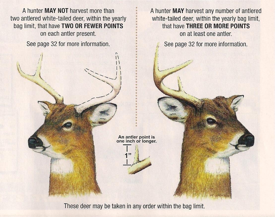 Deer Rut Whitetail 2020 – Template Calendar Design-Md Deer Rut 2021