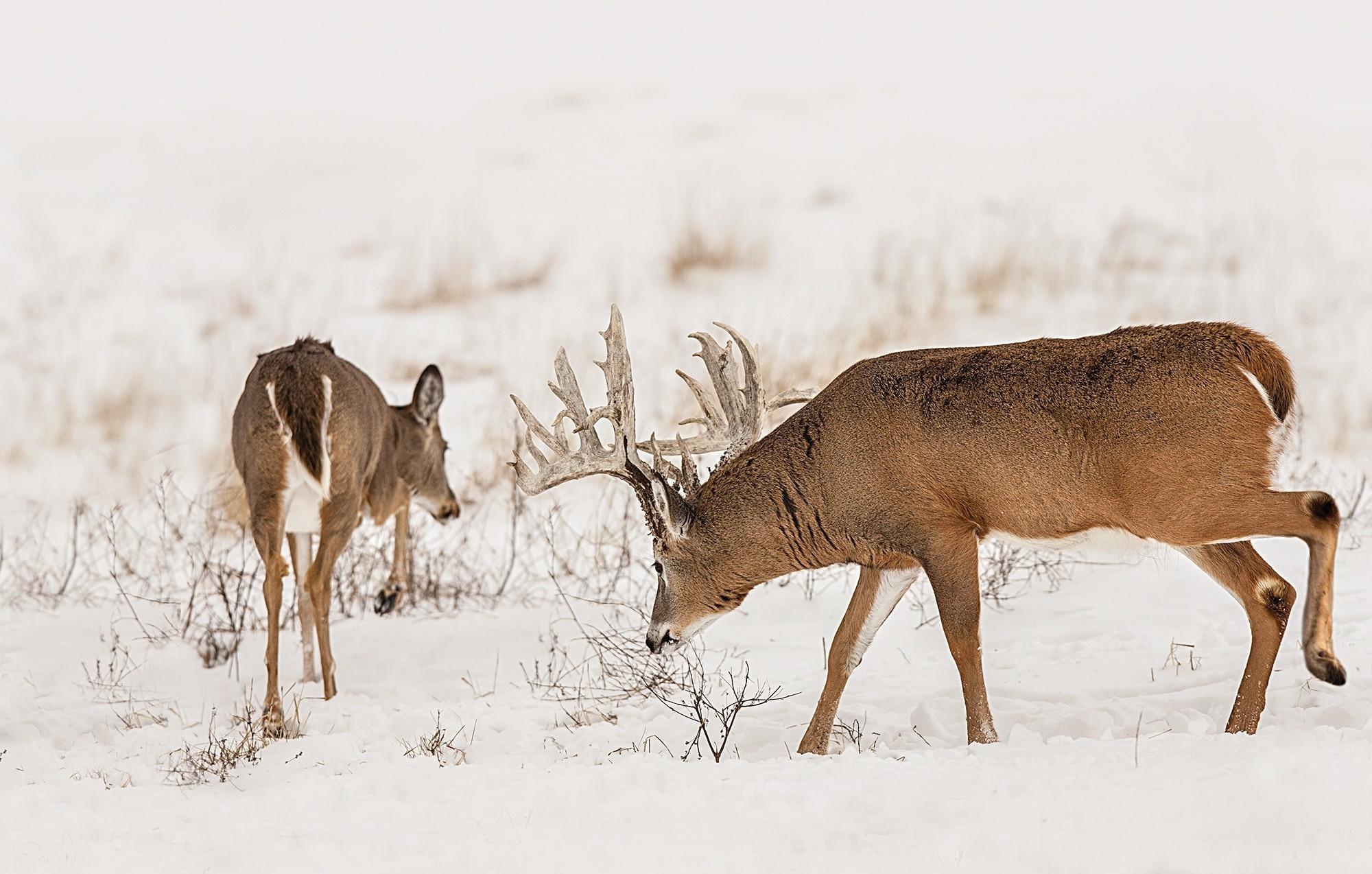 Ga Deer Rut Dates 20019 – Template Calendar Design-2021 Whitetail Rut Calendar