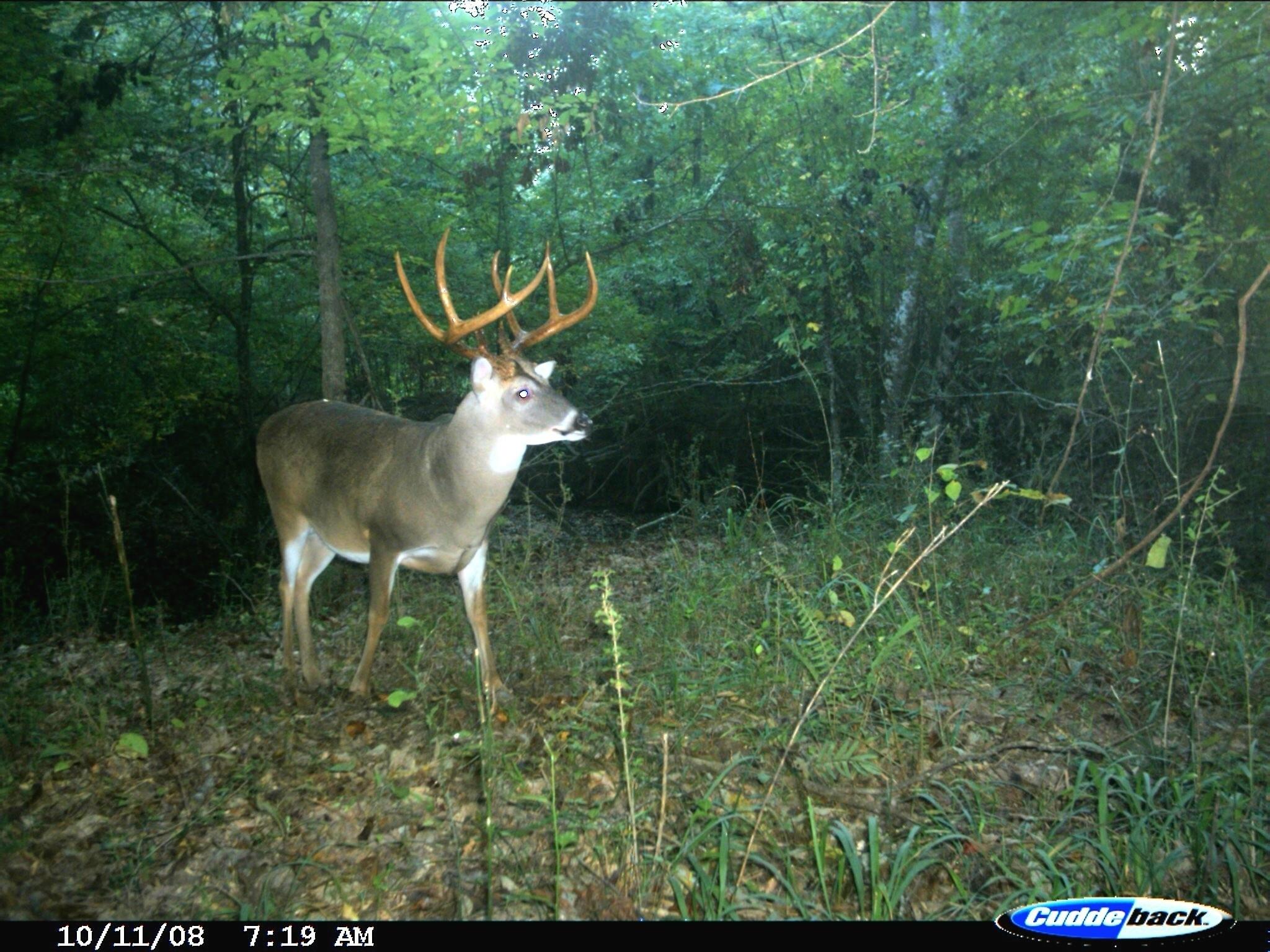 Georgia Deer Forecast – Template Calendar Design-2021 Whitetail Deer Rut Predictions