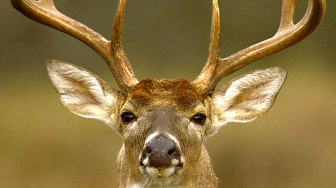 Get Louisiana Sportsman'S Statewide Rut Report - Louisiana Sportsman-Deer And Deer Hunting Rut Forecast Nys