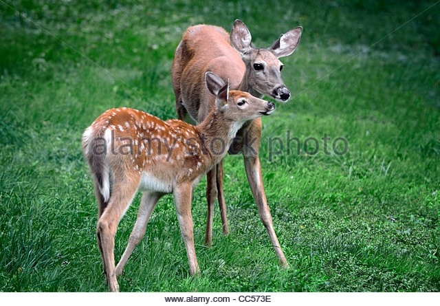 Northport Game Breeder Charged With Illegal Import Of Deer Across State Lines – The Trussville-Indiana 2021 Whitetailed Deer Rut Date