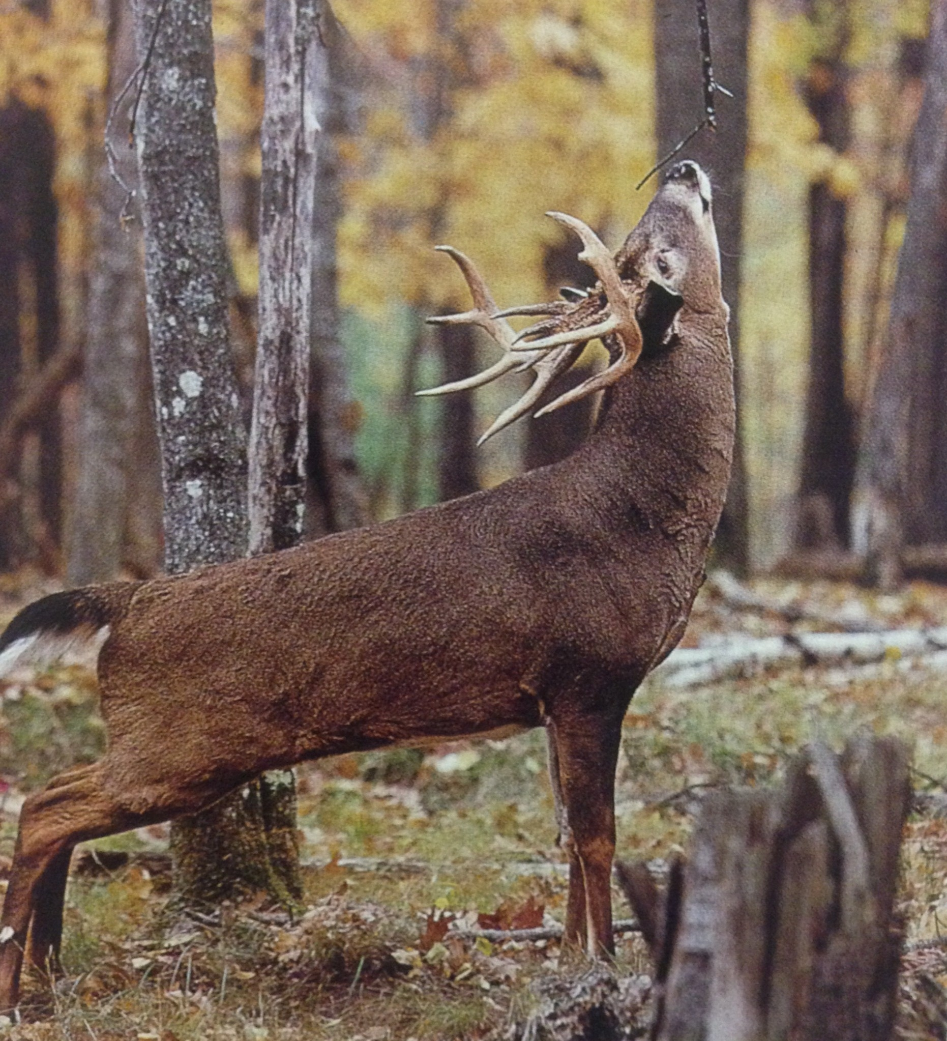 October | 2013 | Missouri Whitetail-2021 Deer Rut Predictions