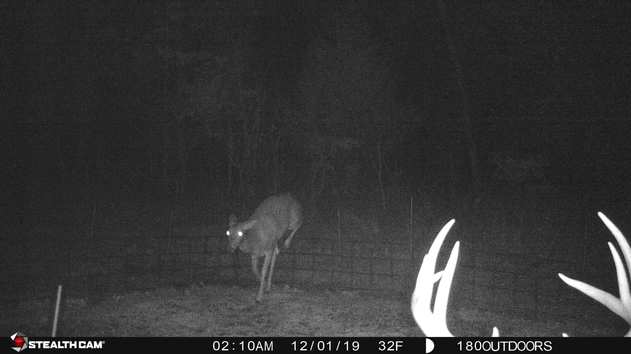 Osage 270 - Oklahoma Lease 2020 - Hunt 180-Midwest 2021 Whitetail Rut Predictions