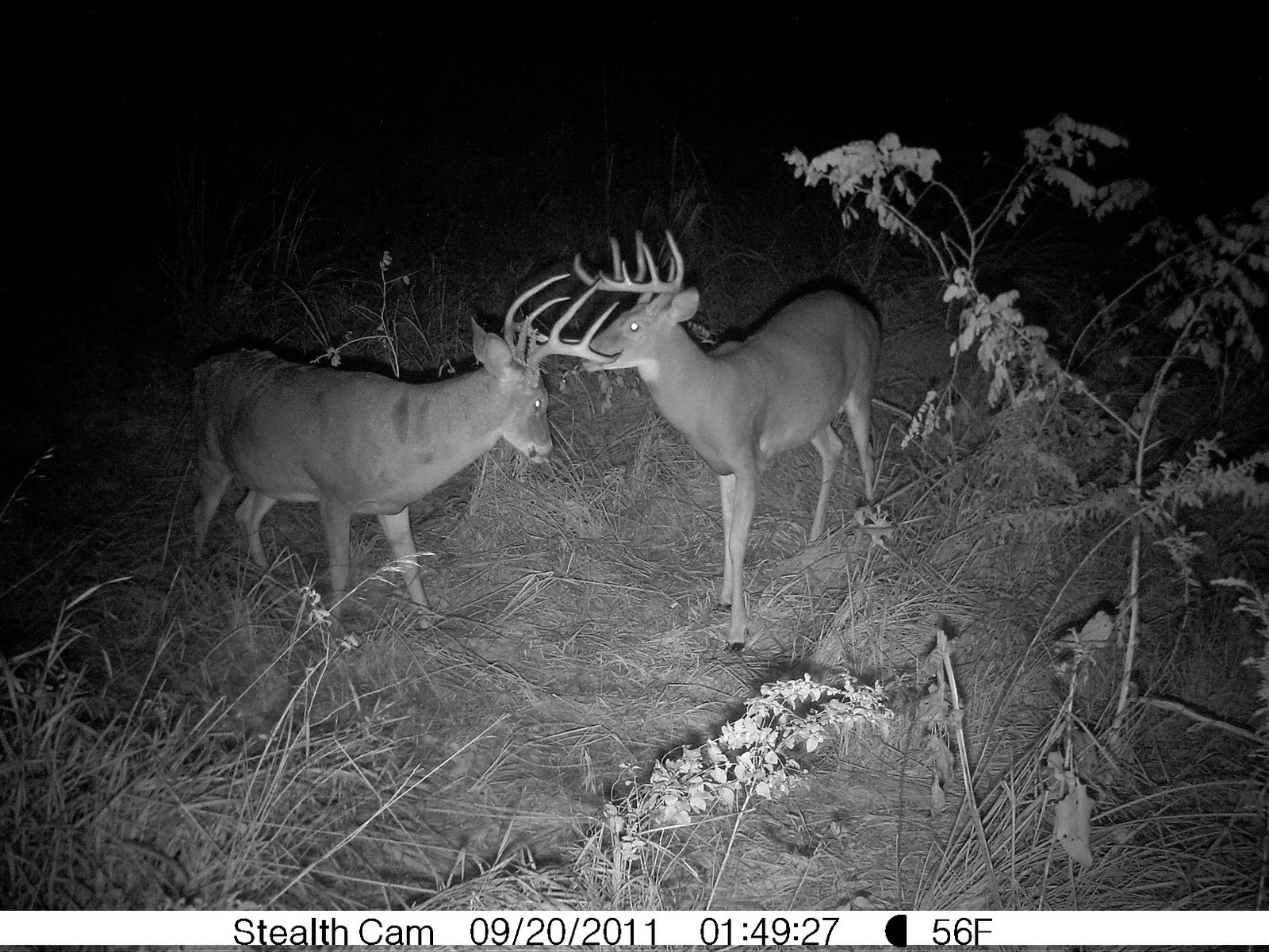 Outdoors Weather Guide: September 2011-Deer Rut Predictions Iowa 2021
