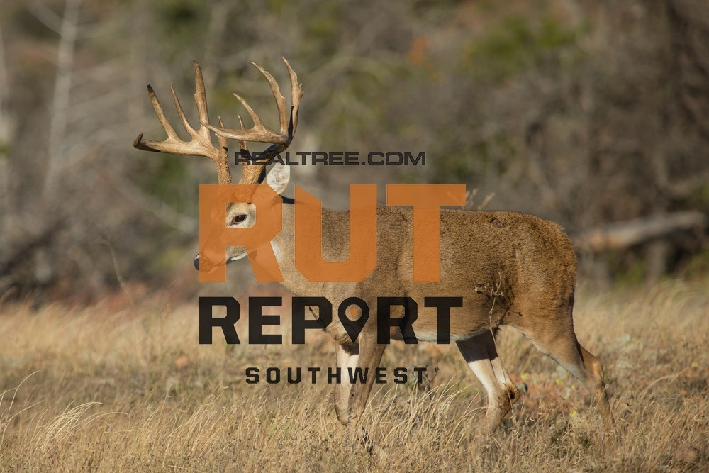 Southwest Rut Report: Drought Causing Deer To Hit Water Holes And Bait | Realtree Camo-Deer And Deer Hunting Rut Forecast Nys