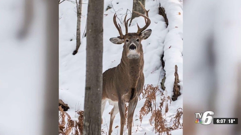 Three-Antler Deer Spotted In Michigan's Upper Peninsula By Steven Lindberg - The Washington Post-2021 Deer Outlook For Michigan