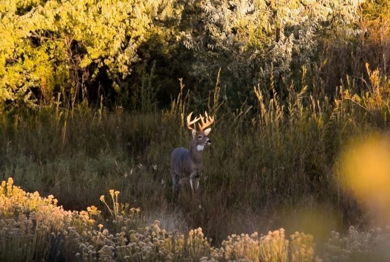 What Do You Know About The Whitetail Rut | Ehuntr-Whitetail Rut In Texas 2021