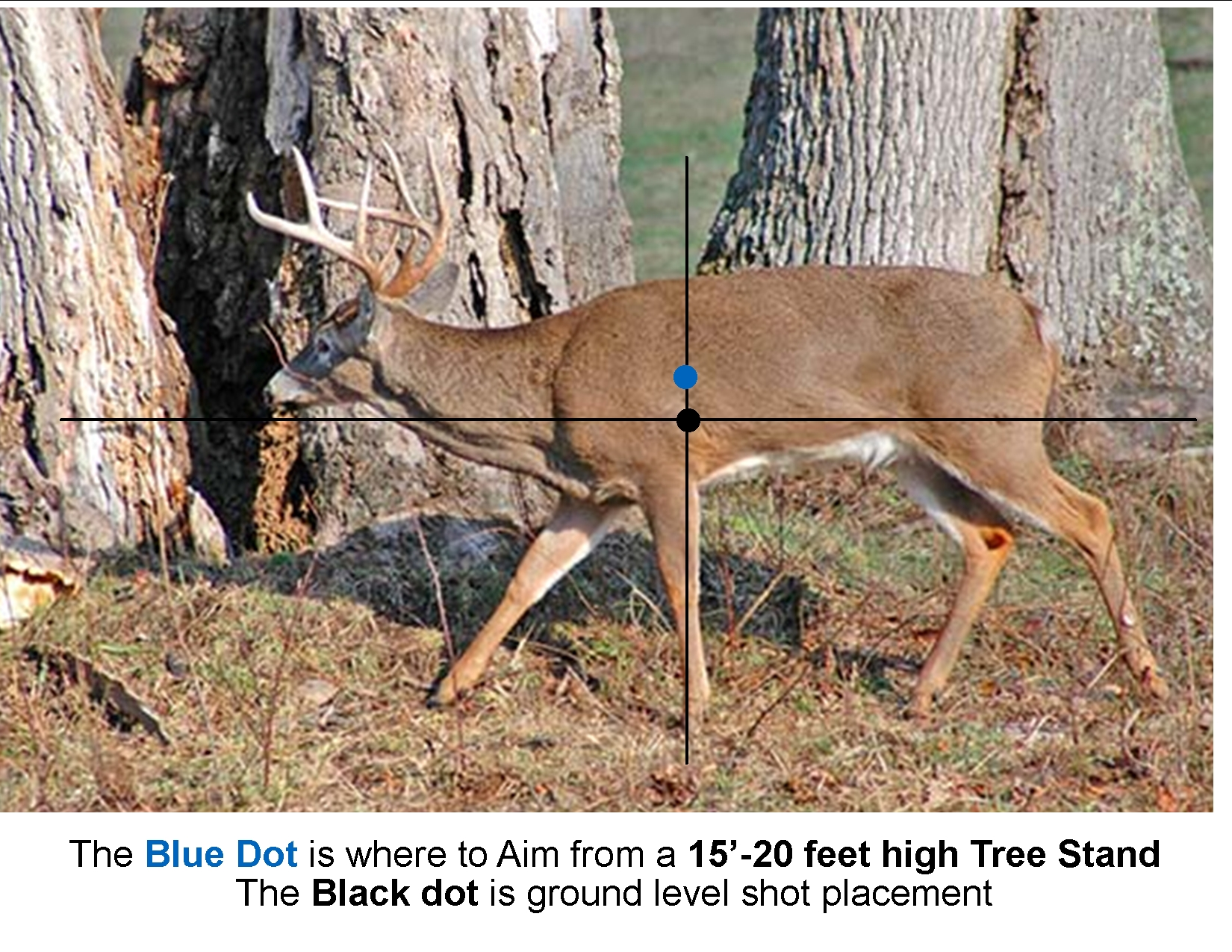 Where To Aim Broadside Walking Buck - We'Re All About Maryland Bucks-Maryland Deer Rut 2021
