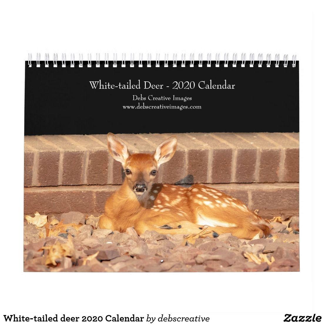 White-Tailed Deer 2020 Calendar | Zazzle | Whitetail Deer, 2021 Calendar, Deer-Indiana 2021 Deer Calender