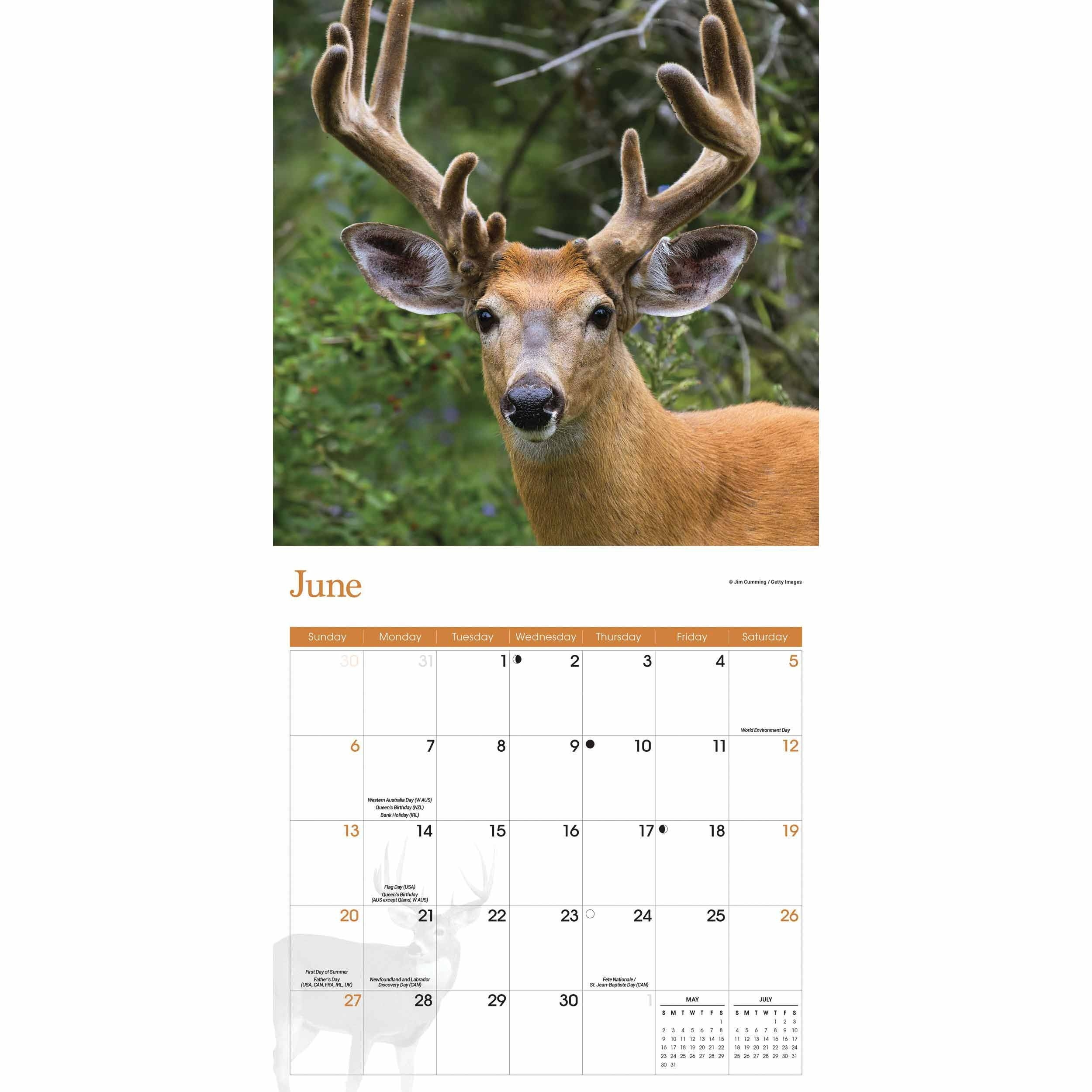 White-Tailed Deer Calendar 2021 At Calendar Club-2021 Deer And Deer Hunting Rut Calendar