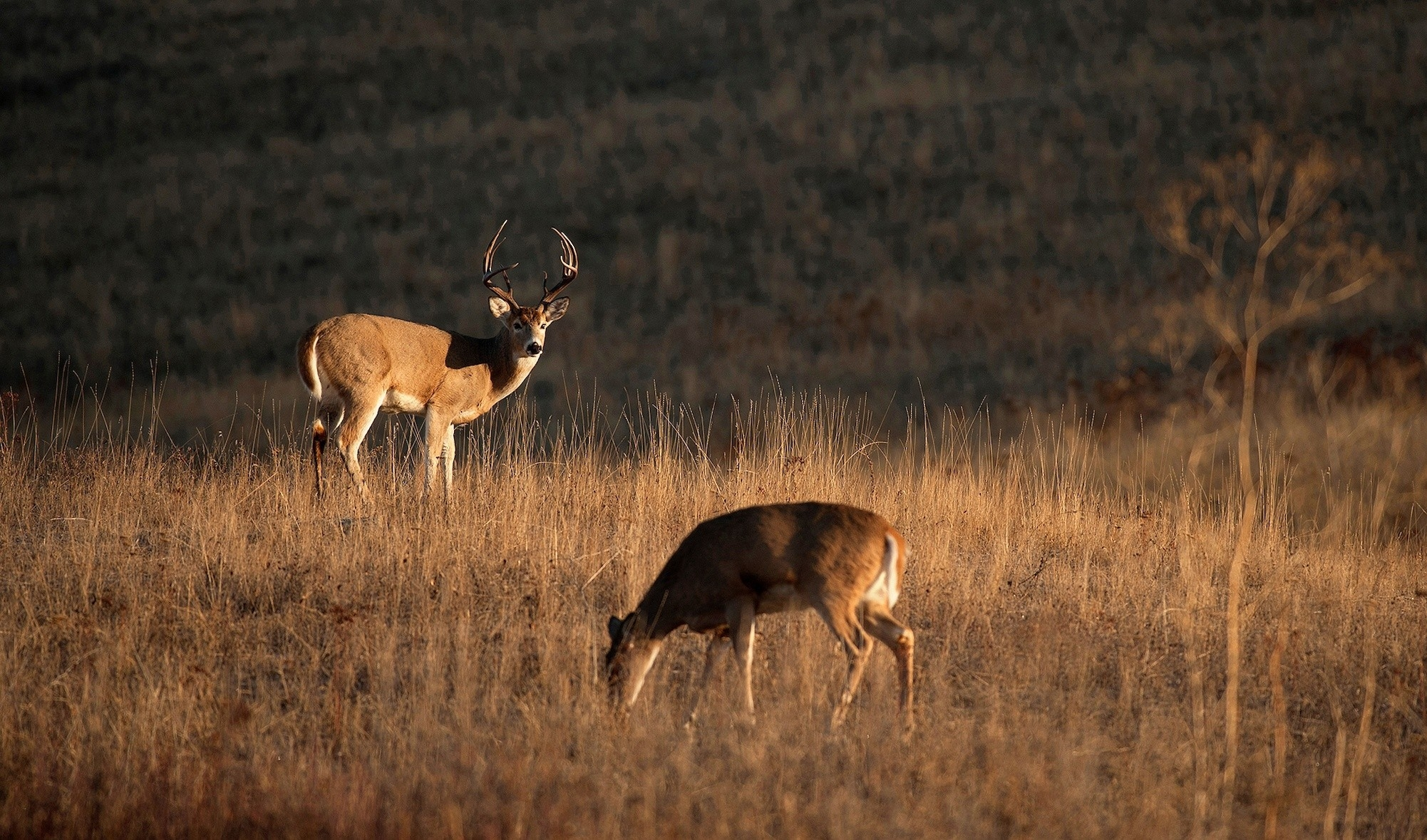 Whitetail Buck 2019 In Pa – Template Calendar Design-Whitetail Rut Predictions For 2021