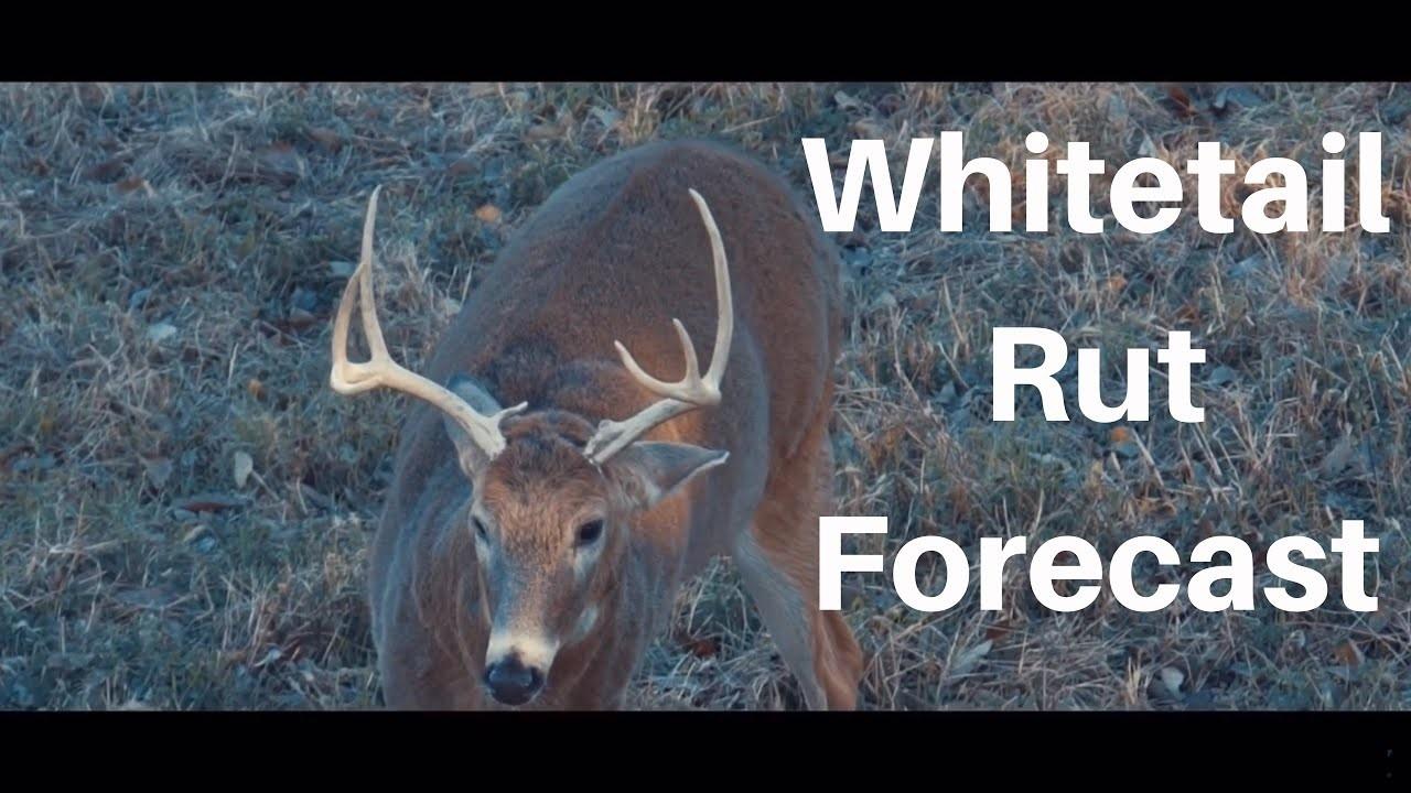 Whitetail Rut Forecast – Michigan And Illinois Hunting Prediction – Calendar Printable Free-2021 Whitetail Deer Rut Predictions
