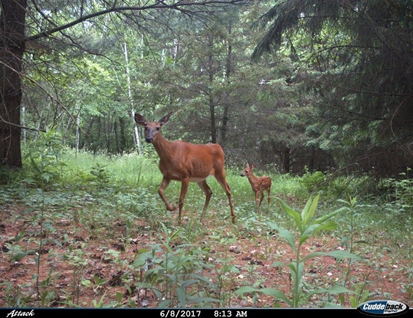 Wisconsin's Natural Resources Board Counters Dnr On Several 2020 Antlerless Deer Options-2021 Deer Outlook For Michigan