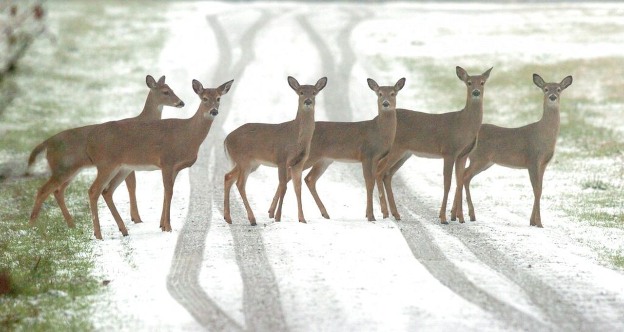 New Map Makes Finding Deer Easier For Alabama Hunters - Al-Alabama Rut Map 2021
