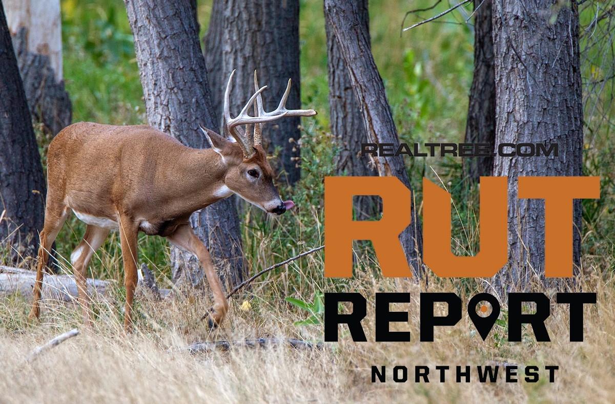 Nov. 12 Northwest Rut Report, 2020-Peak Rut Predictions For 2021