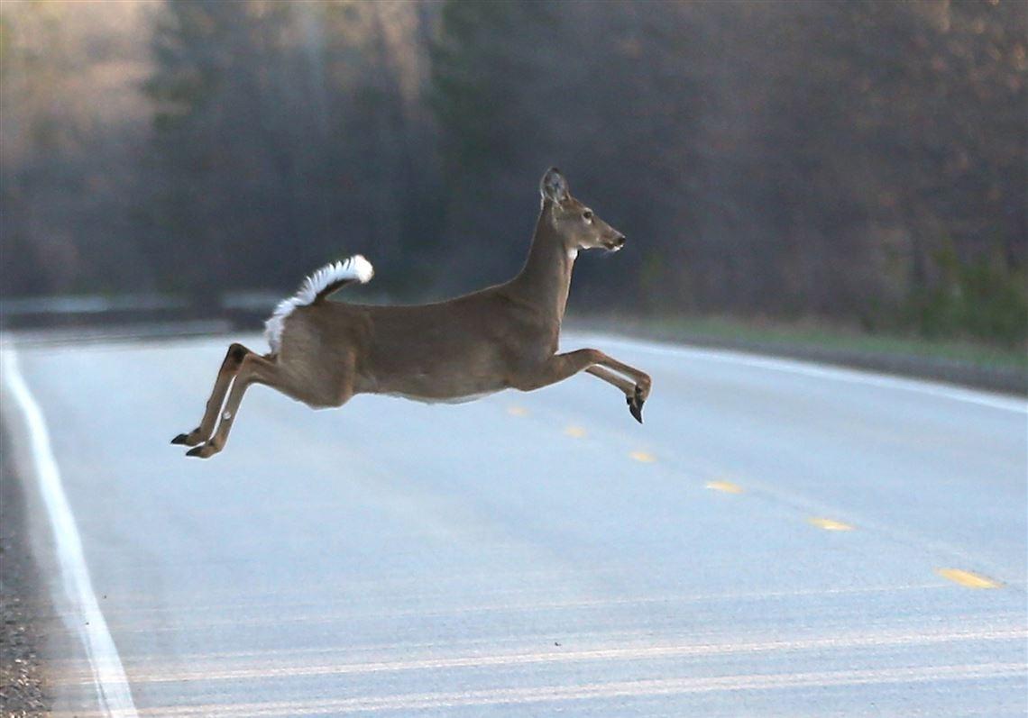 Outdoors: Deer Activity Spikes Due To Rut, Crop Harvest-2021 Michigan Deer Rut