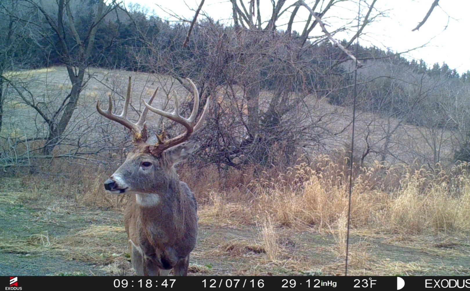 Post Rut Phase Hunting Tactics | Whitetail Habitat Solutions-Hunting The Rut In 2021