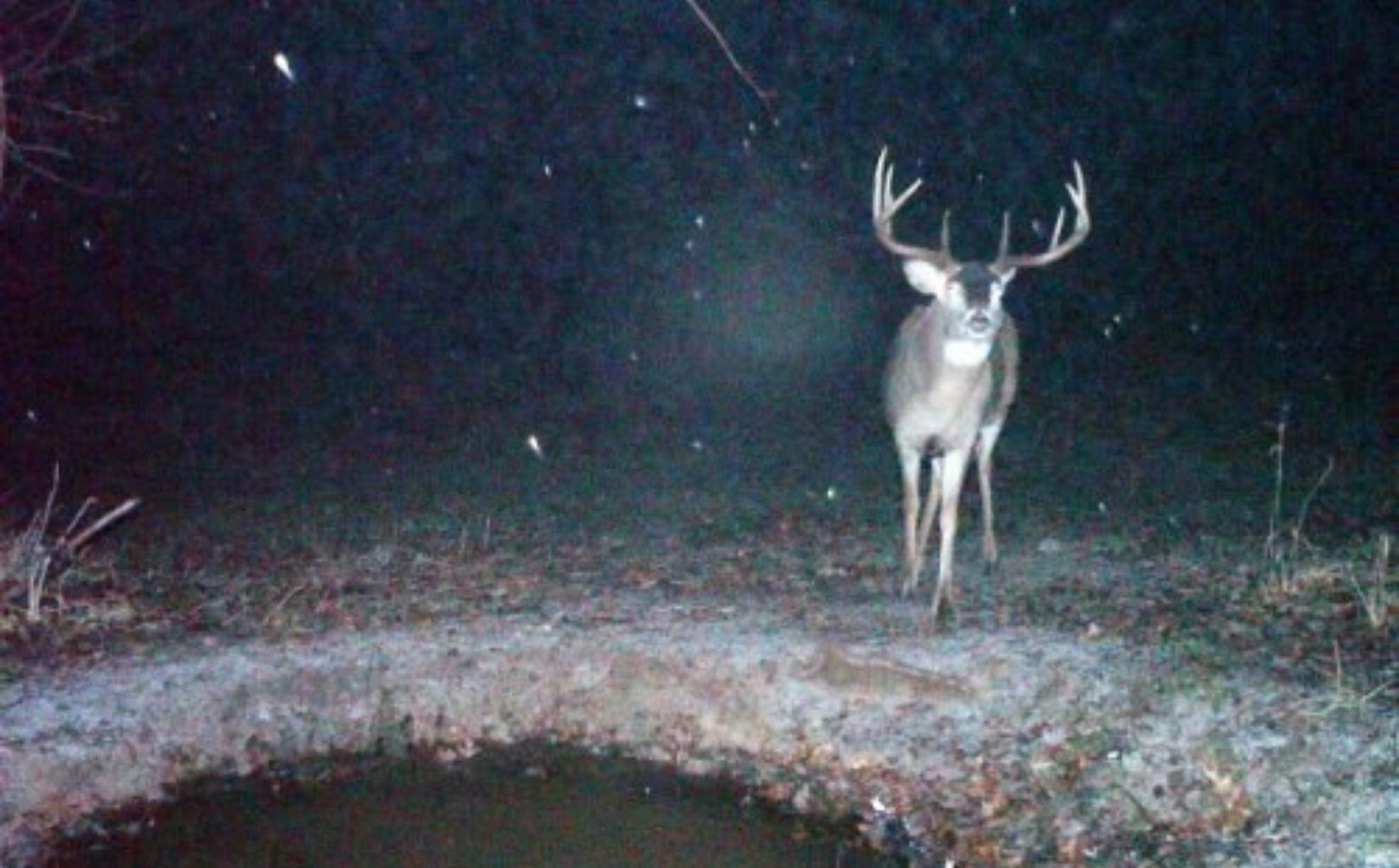 Whitetail Rut Weather Guide   Whitetail Habitat Solutions-Dates Of Whatetail Rut In Wisconsin 2021