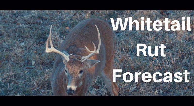 2021 Deer And Deer Hunting Rut Calendar | Calendar-2021 Whitetail Rut Callendar In Ohio