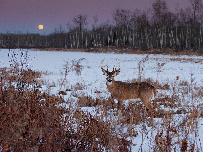 2021 Deer And Deer Hunting Rut Calendar | Calendar-Florida 2021 Deer Rut Prediction