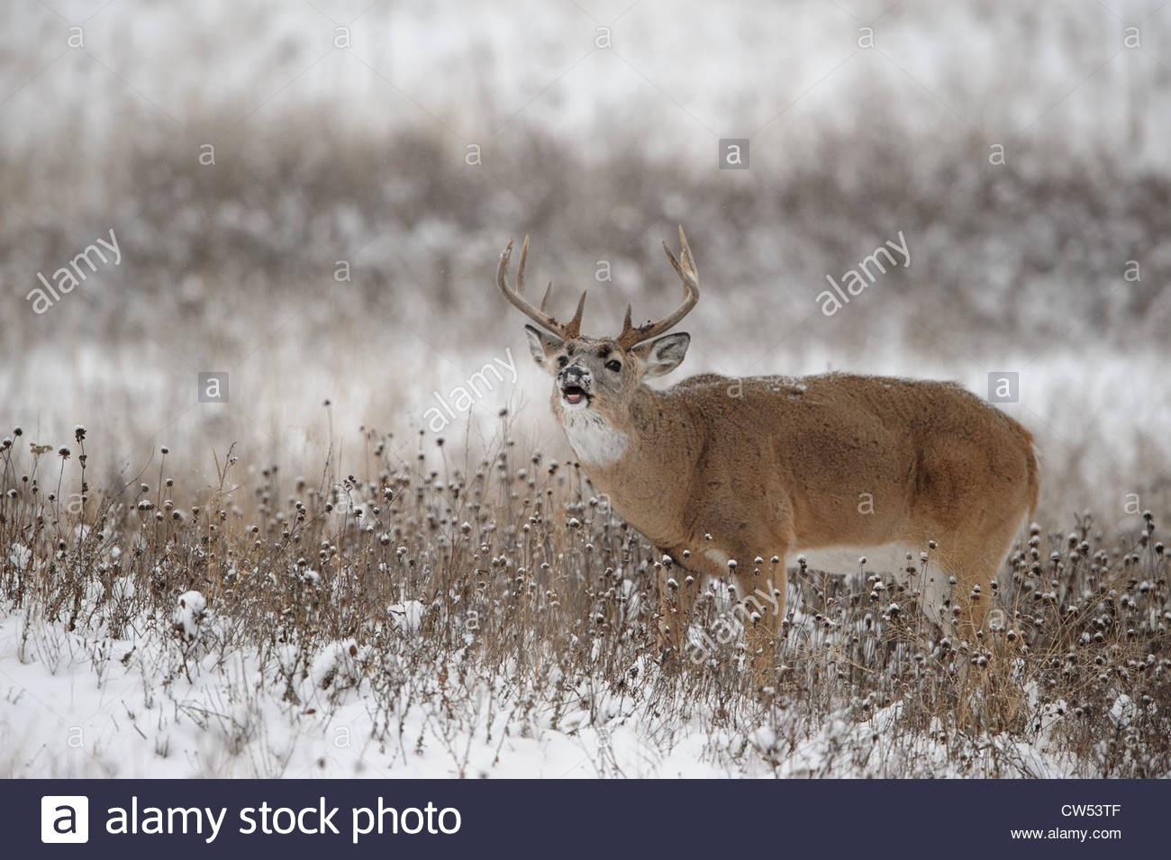 2021 Nys White Tail Rut | Calendar Template Printable-Montana White Tail Deer Rut 2021