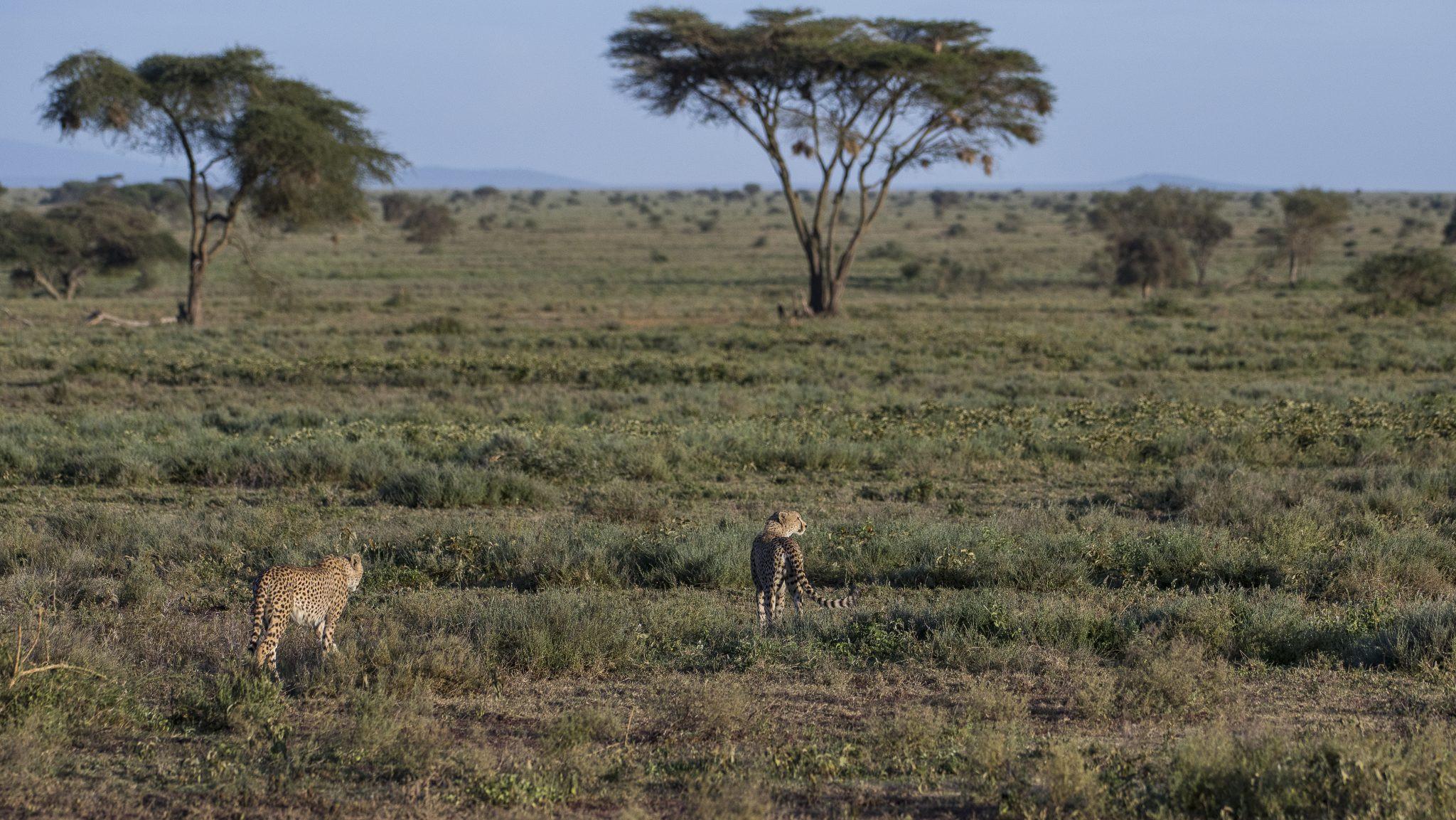 Welcome ~ Wild Departures Wildlife Photo Tours-Rut In Wv 2021